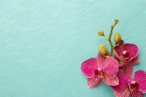 Orchid on teal